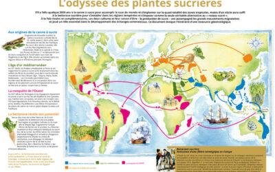 L'histoire du sucre – chronologie